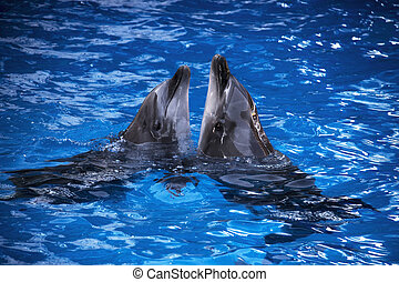 Pair of dolphins swimming in the blue water.