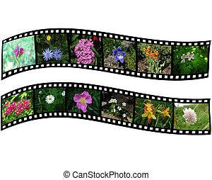 Pair of films with flowers