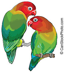 pair of fischer's lovebirds (agapornis fischeri ). Two small...