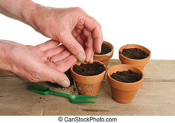 Pair of hands planting seeds