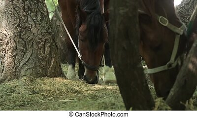 pair of horses eating grass