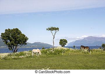 Pair of horses grazing in Norway