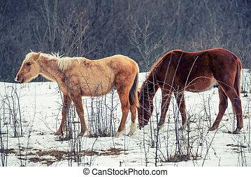 Pair of horses grazing in winter