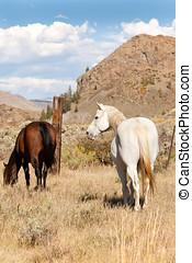 Pair of Horses in Pasture