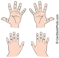 Pair of Human Hands Front & Back view with all fingers