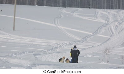 Pair of husky sled dogs with dog-driver