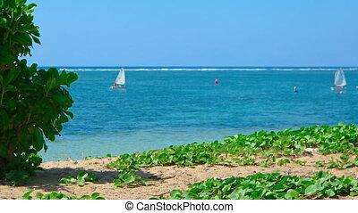 Pair of Matching Sailboats Converge off a Tropical Beach Paradise