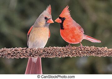 Pair of Northern Cardinals (cardinalis) on a branch green...
