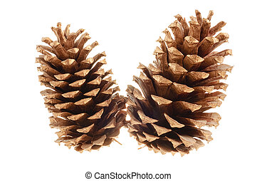 pine cones - pair of pine cones isolated on a white...