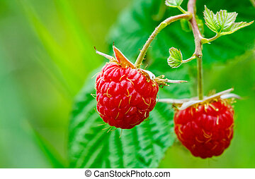 pair of raspberry with leaf on green background