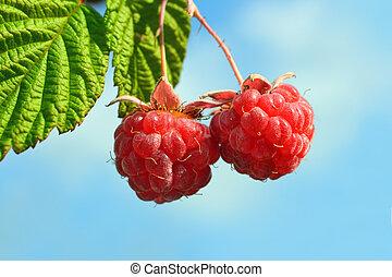 pair of raspberry