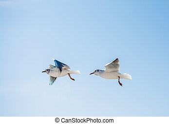Pair of seagulls flying in sky over the sea waters