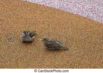pair of small sparrows