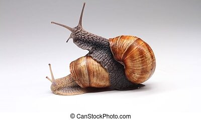 pair of snails on a white background