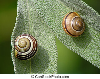 Pair of snails on green leaves on summer day