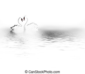 pair of swans - elegant abstract background with pair of...