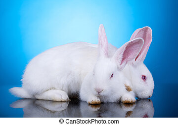 white bunnies playing