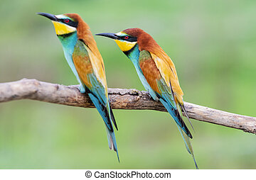 pair of wild colorful birds sitting on a branch