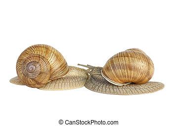 paire, baisers, autre, escargots, chaque