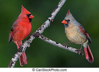 paire, cardinal