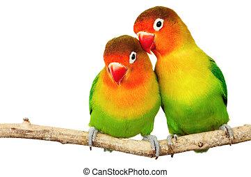paire, de, lovebirds