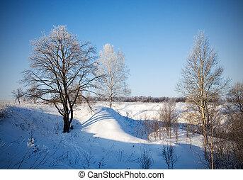 paisagem, árvores inverno, gelado