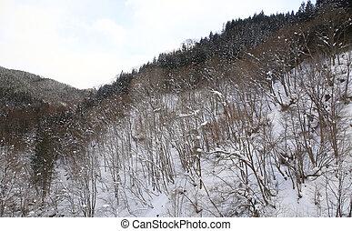 paisagem, árvores inverno, neve