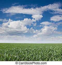 paisagem, capim, céu
