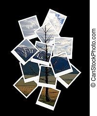 paisagem, colagem, de, fotografias, para, seu, desenho