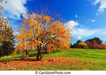 paisagem., coloridos, outono, folhas, árvore, outono