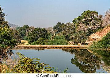 paisagem, com, árvores, e, lago, em, ranthambore, índia