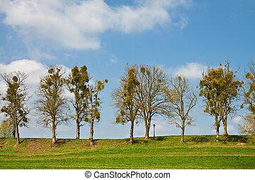 paisagem, com, árvores.