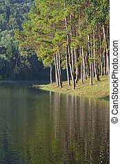 paisagem, com, árvores pinho, lago