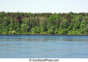 paisagem, com, floresta, e, banco rio