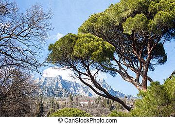 paisagem, com, montanhas, e, árvores