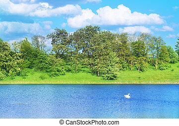 paisagem, com, um, cisne