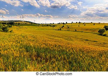 paisagem, com, um, trigal, em, verão