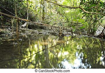 paisagem, de, água, ligado, rio, em, floresta