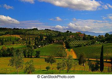 paisagem, de, italiano, tuscan, vilas, e, vinhedos