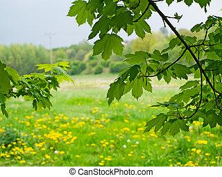 paisagem, de, natureza