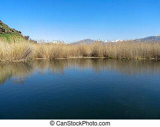 paisagem, de, um, lago, com, a, canas, refletido dentro, it.