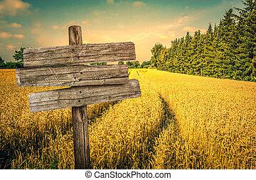 paisagem, dourado, colheita, campo