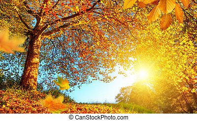 paisagem, dourado, sol, lotes, outono
