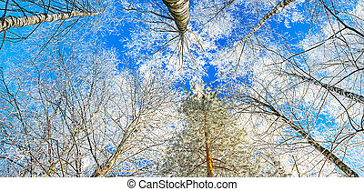 paisagem, floresta, céu azul, panorama, inverno