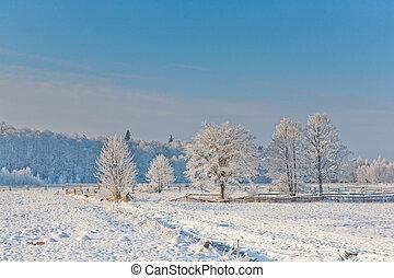 paisagem inverno, com, árvores, neve, embrulhado