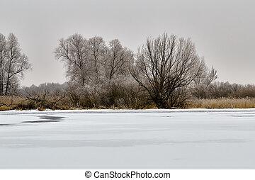 paisagem inverno, e, árvores