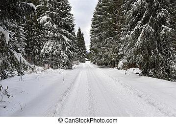 paisagem inverno, em, a, floresta, com, árvores cobertas