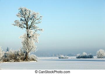 paisagem inverno, series:, geada, cobertura, chão