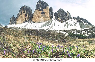paisagem., jornada, ao redor, cime, nevado, primavera, tre, acima