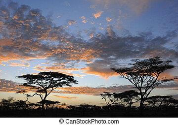 paisagem, leste, sunset., acaccia's, africano